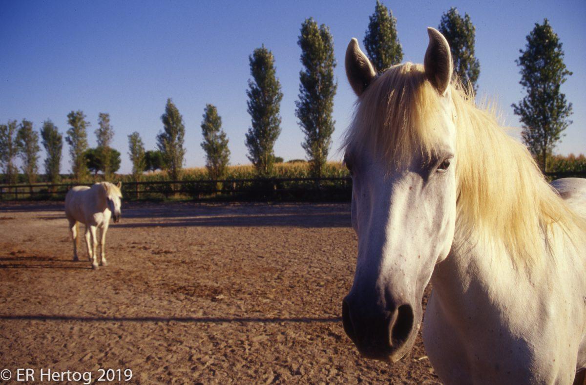 Esther_Hertog_photography-006