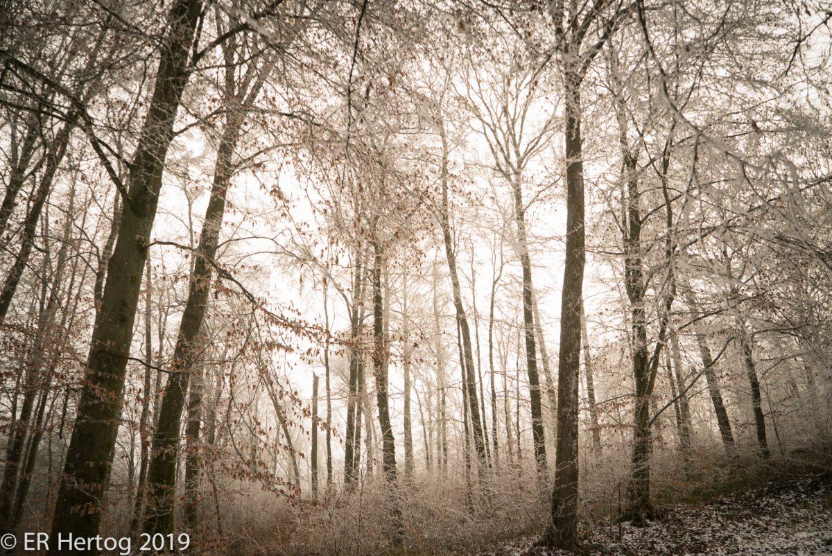 Esther_Hertog_photography-02124